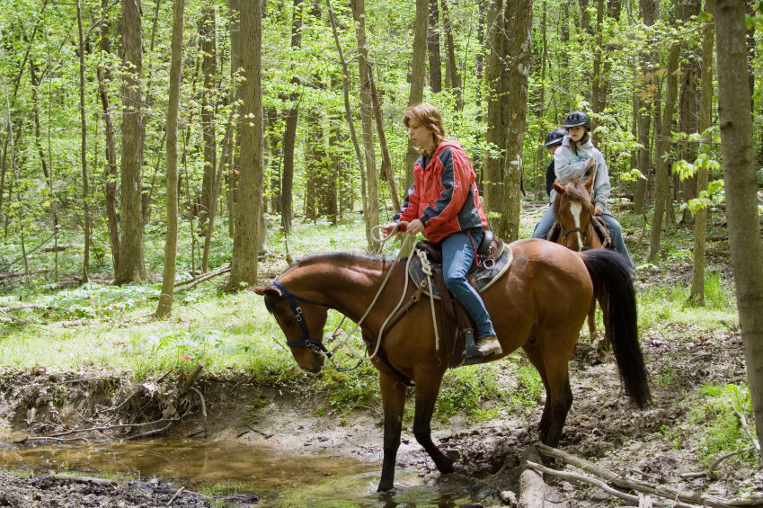 people horseback riding in the woods during springtime