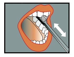 Brush the inside of your front teeth with the end of the brush.
