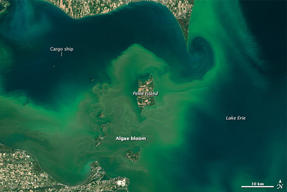 Health Topic Blue Green Algae And Harmful Algal Blooms