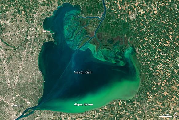 Health Topic Blue Green Algae And Harmful Algal Blooms