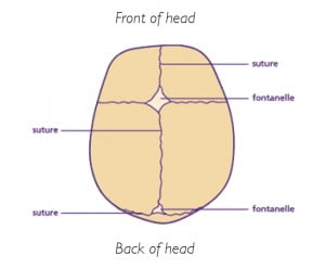 Diagram of baby skull