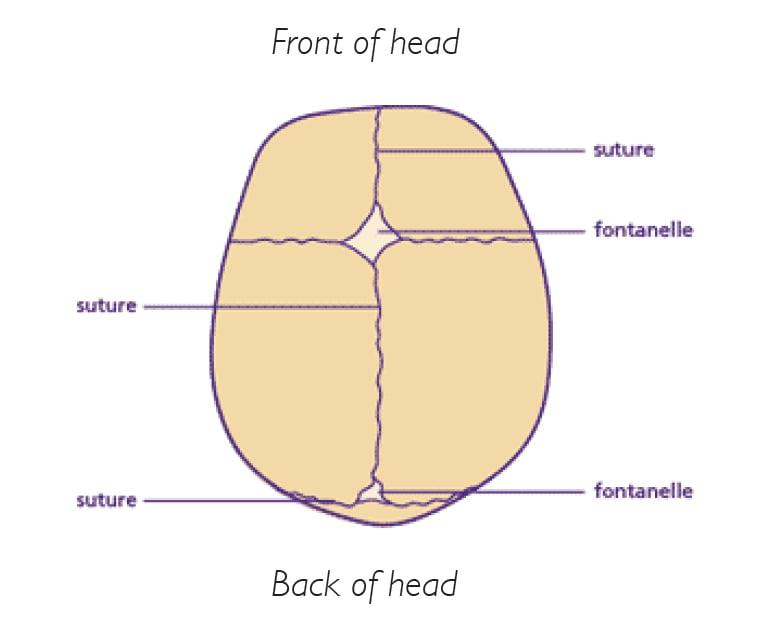Normal Skull Diagram Wiring Circuit