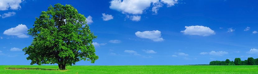 green field with a big tree and a blue sky