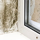mould in a window sill